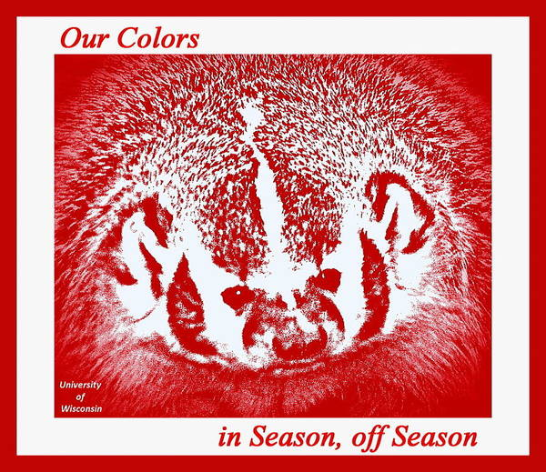 Badger Poster featuring the photograph Go Go Badgers by Zafer Gurel