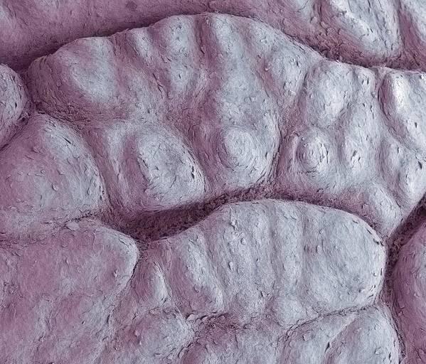 Skin Poster featuring the photograph Primate Fingerprint Ridges, Sem by Steve Gschmeissner