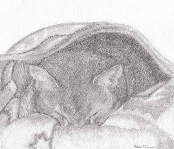 Cats Poster featuring the drawing ...all Comfy Cozy... by Bari Titen