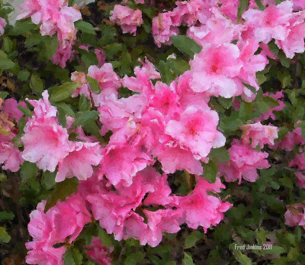 Althea Poster featuring the photograph Azalea Watercolor by Fred Jinkins
