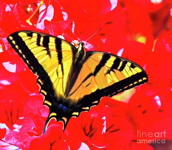 Butterfly Poster featuring the photograph Butterfly Series #11 by Edita De Lima