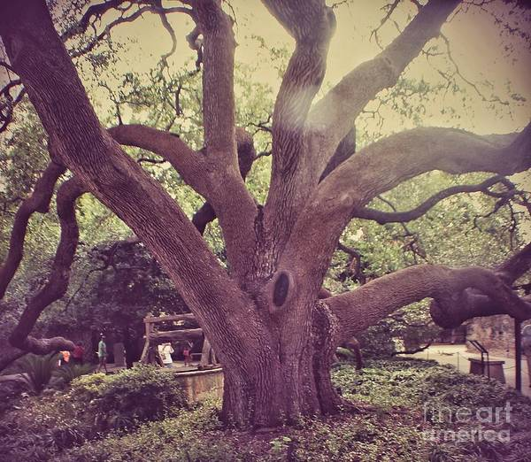 Nature Poster featuring the photograph Tree Of Life by Biz Bzar