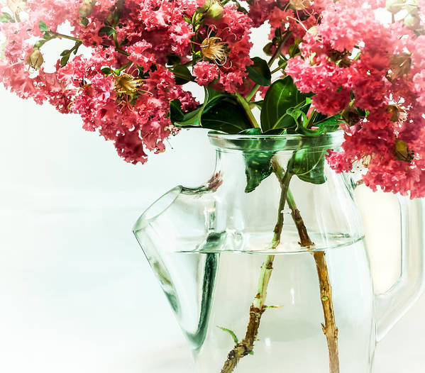 Flower Poster featuring the photograph Crepe Myrtle In A Vase by Gabrielle Harrison