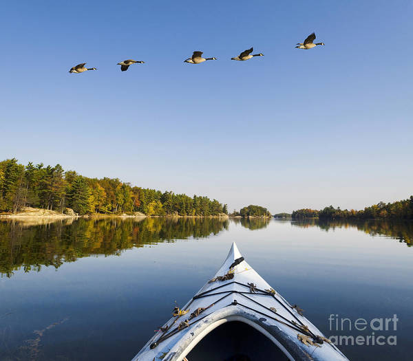 Autumn Poster featuring the photograph Morning On The Tranquil Lake by Gord Horne