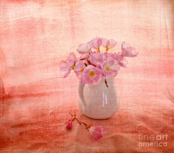 Pink Primroses Poster featuring the photograph Primroses D'orange by Linde Townsend