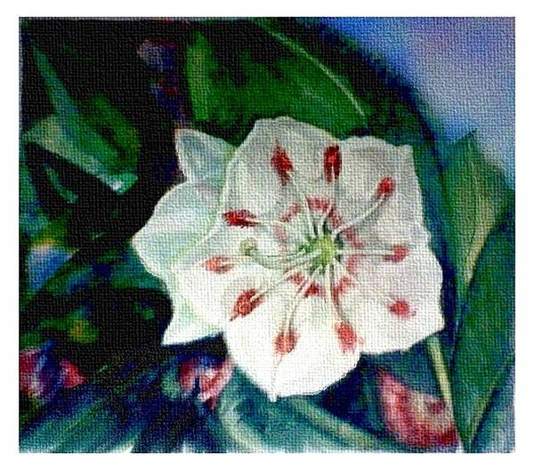 Art Poster featuring the painting Mountain Laurel Blossom Closeup by Elle Smith Fagan