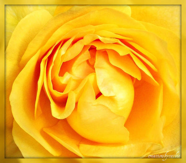 Rose Poster featuring the photograph Yellow Petals by Cathie Tyler