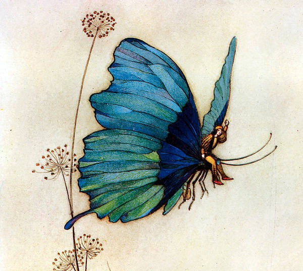 Warwick Goble Poster featuring the digital art Blue Butterfly II by Warwick Goble