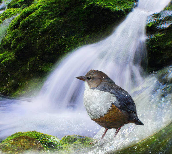 Dipper Poster featuring the painting Waterfall And Ouzel European Dipper by R christopher Vest