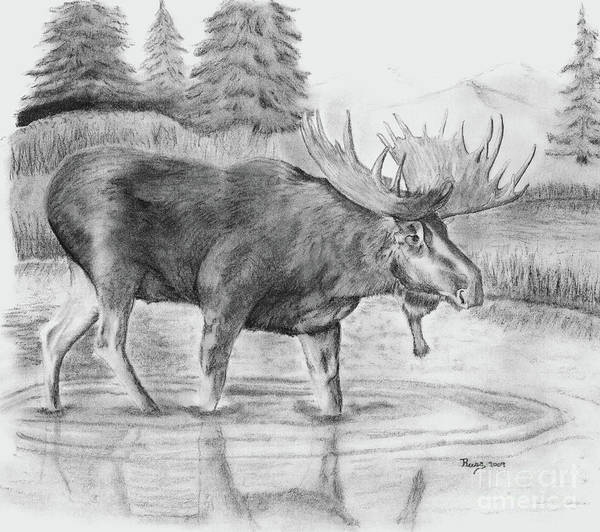 Bull Moose Poster featuring the drawing Bull Moose A Walk In The Pond by Russ Smith