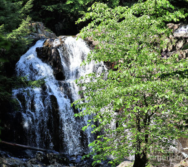 Waterfalls Poster featuring the photograph Houston Brook Falls Square by Sandra Huston