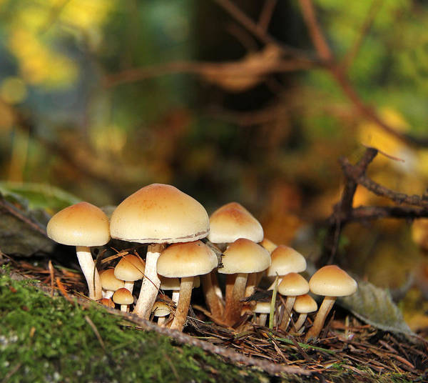 Mushroom Poster featuring the photograph It's A Small World Mushrooms by Jennie Marie Schell