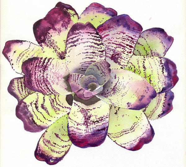 Neoregelia Poster featuring the painting Neoregelia 'freeman's Vision' by Penrith Goff