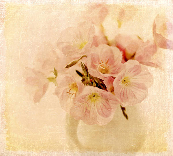 Primroses Poster featuring the photograph Primrose Delights by Linde Townsend