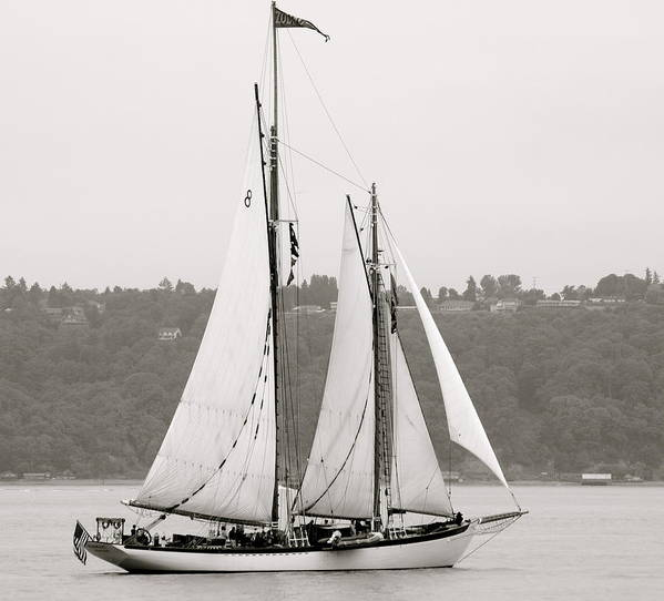 Tall Ships Poster featuring the photograph Zodiac by Sonja Anderson