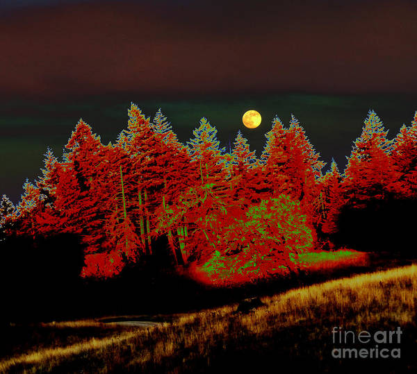 Landscape Poster featuring the photograph Dreaming Tree Moon by JoAnn SkyWatcher