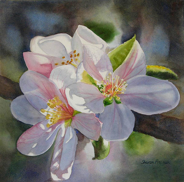 Apple Blossom Poster featuring the painting Apple Blossoms In Sunlight by Sharon Freeman