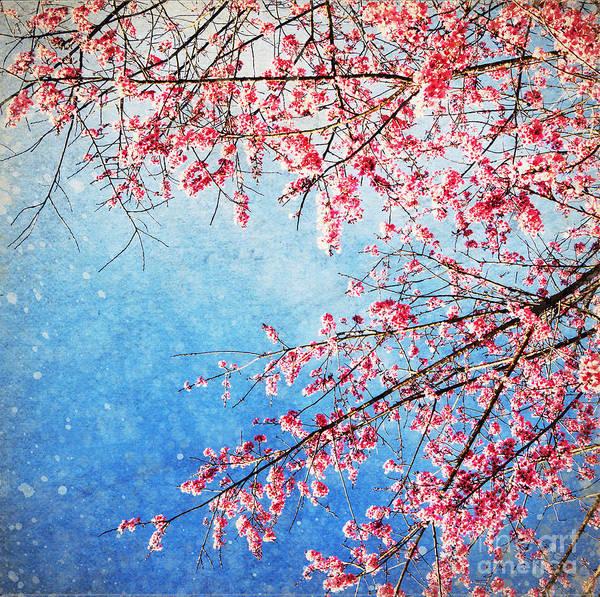 April Poster featuring the photograph Pink Blossom by Setsiri Silapasuwanchai