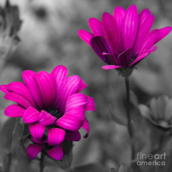 #nature Poster featuring the photograph Wildflower 2 by Jacquelinemari