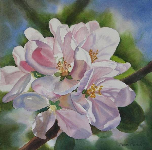 Apple Blossom Poster featuring the painting Apple Blossoms by Sharon Freeman