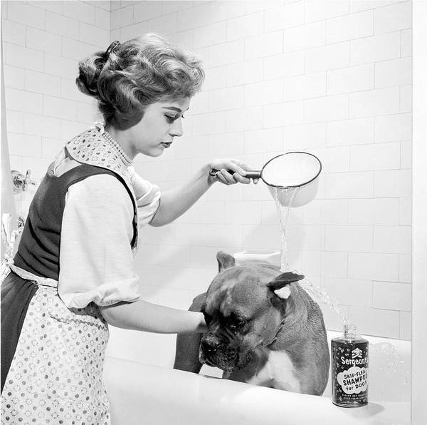 Young Adult Poster featuring the photograph Pampered Pup by Flecknoe