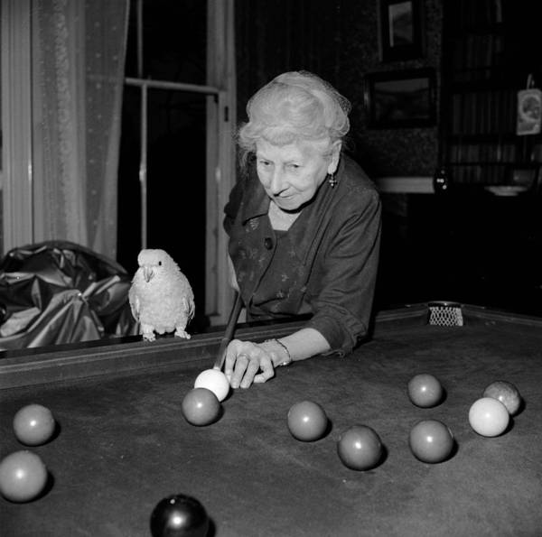 Senior Adult Poster featuring the photograph Parrots And Snooker by Reg Speller