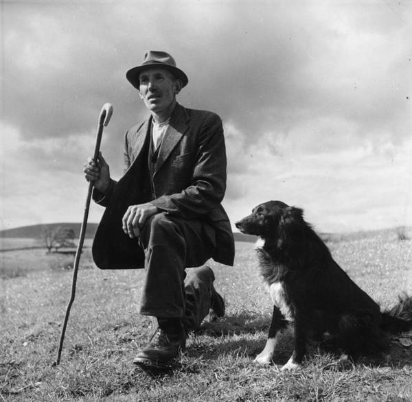 Mid Adult Poster featuring the photograph Shepherd by Bert Hardy