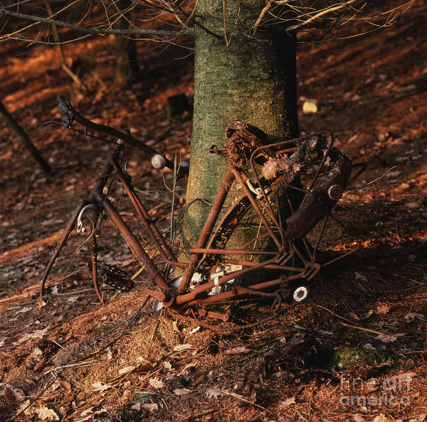 Danger Poster featuring the photograph Bicycle Abandoned In A Forest by Bernard Jaubert