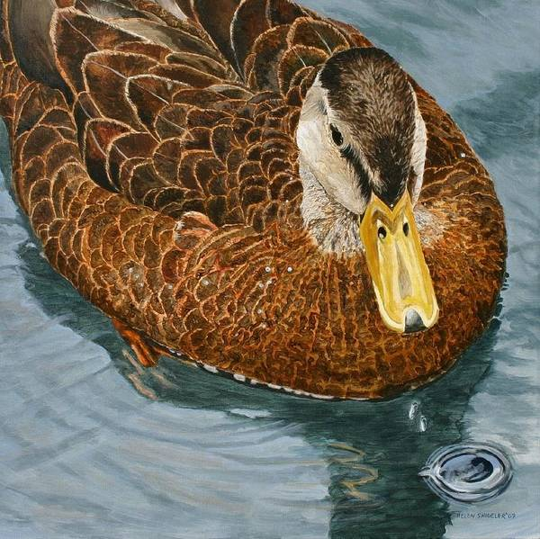 Duck Poster featuring the painting Daphne Waddell by Helen Shideler