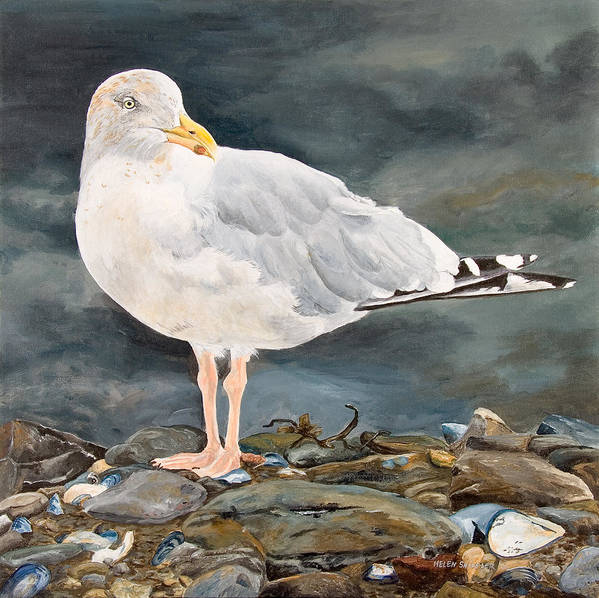 Gull Poster featuring the painting Eugene by Helen Shideler