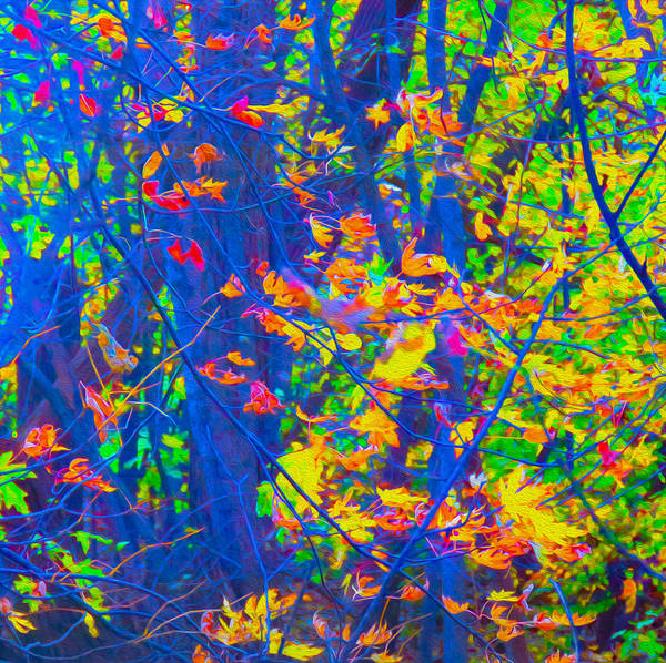World's Most Colorful Forest Foliage Poster featuring the photograph Forest Foliage Art by Ron Fleishman