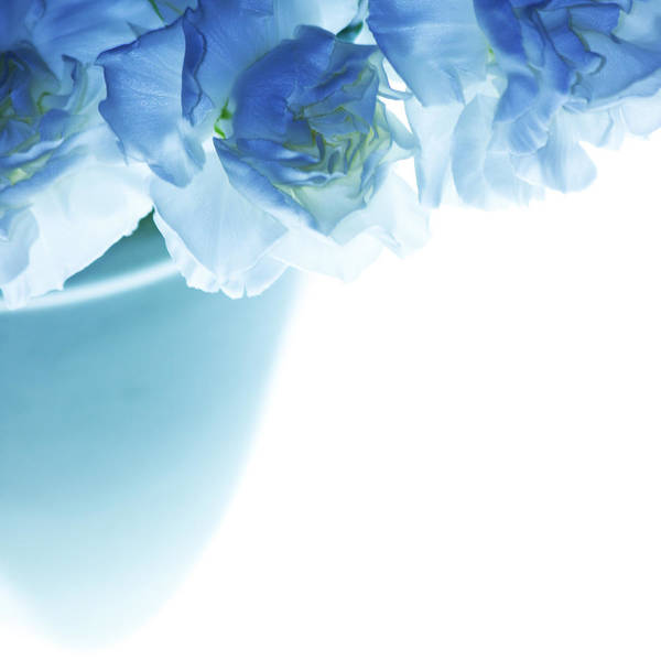 Carnations Poster featuring the photograph Got The Blues by Rebecca Cozart