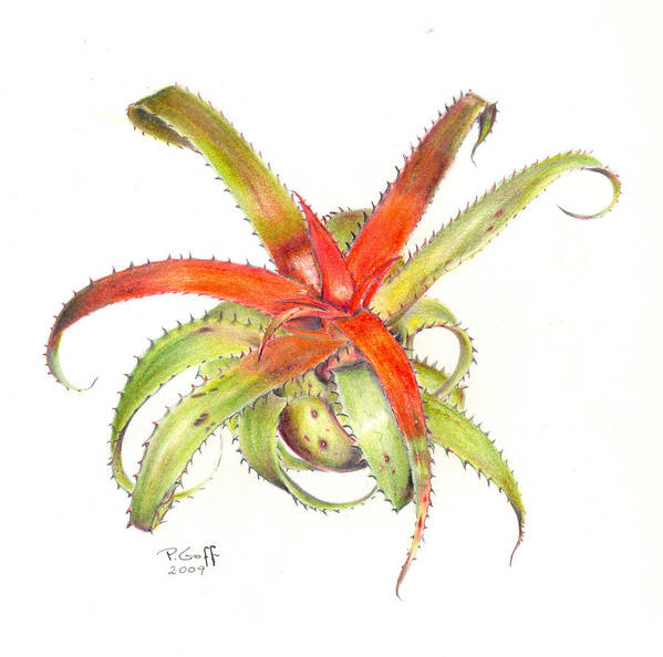 Neoregelia Poster featuring the painting Neoregelia Pendula by Penrith Goff