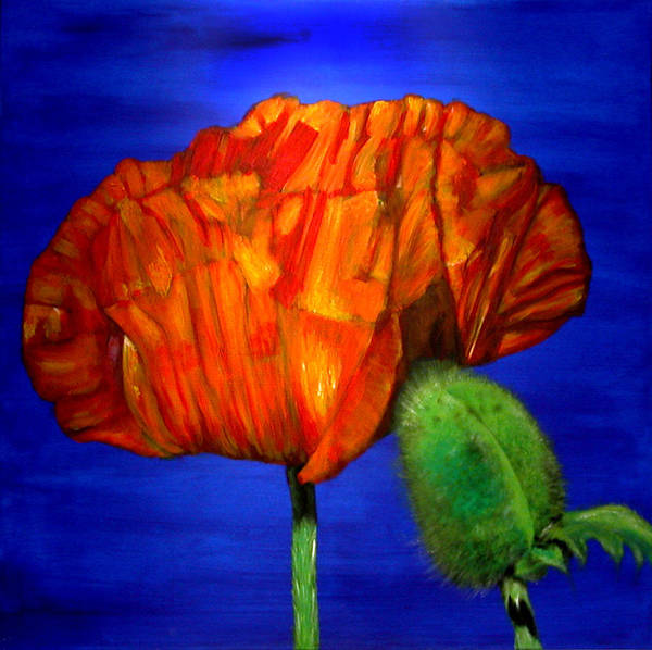 Flower Poster featuring the painting Poppy And Bud by Fiona Jack