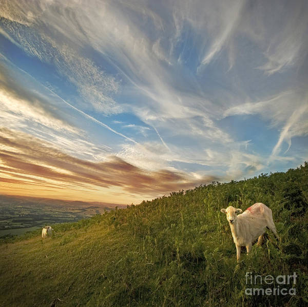 Long Mynd Hill Poster featuring the photograph The Colours Of The Evening by Angel Tarantella