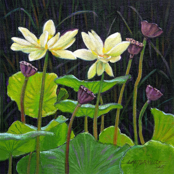 Lotus Poster featuring the painting Touching Lotus Blooms by John Lautermilch