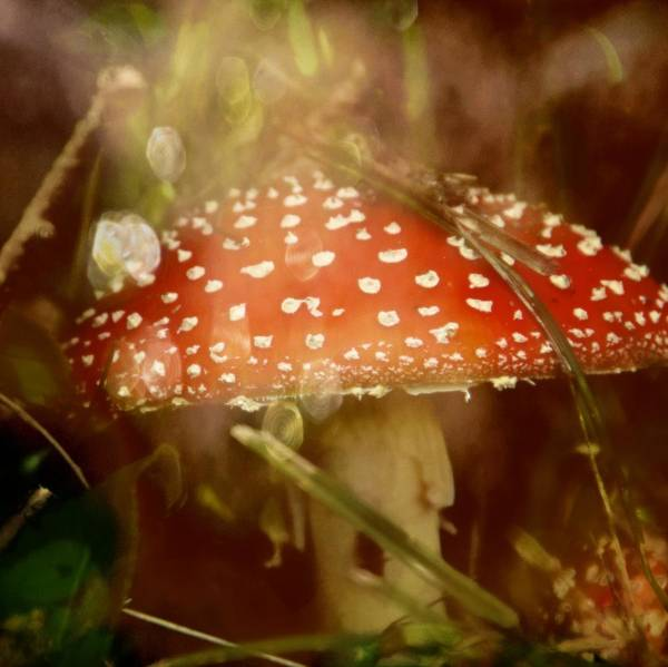 Toadstool Poster featuring the photograph Welcome To Wonderland by Odd Jeppesen