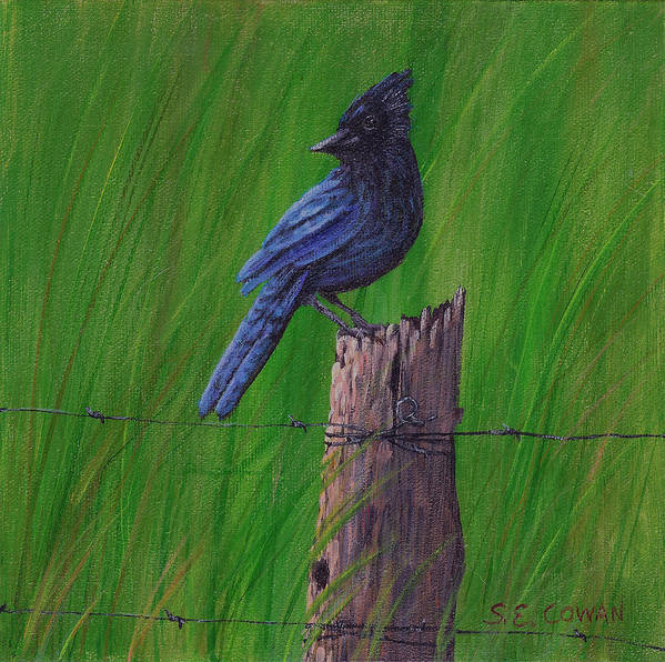 Landscape Poster featuring the painting Stellar's Jay by SueEllen Cowan
