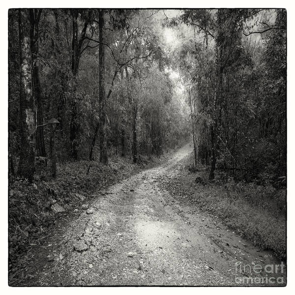 Adventure Poster featuring the photograph Road Way In Deep Forest by Setsiri Silapasuwanchai