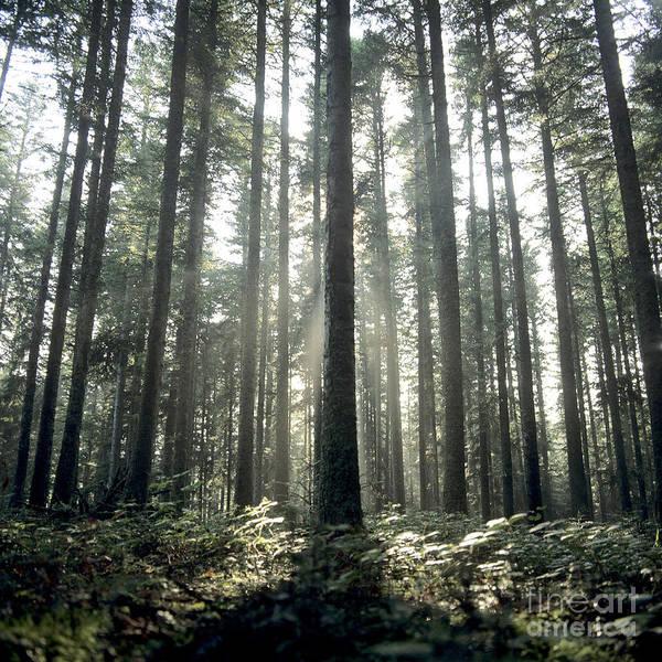 Outdoors Poster featuring the photograph Forest by Bernard Jaubert
