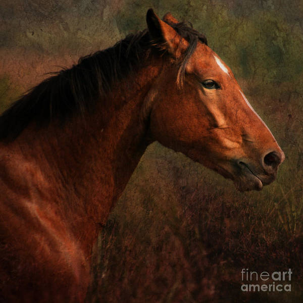 Horse Poster featuring the photograph Horse Portrait by Angel Ciesniarska