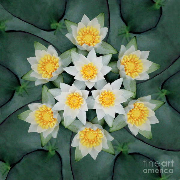Rainbow Poster featuring the photograph Waterlily Mandala by Susan Bloom