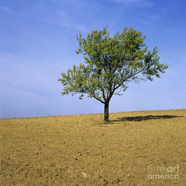 Outdoors Poster featuring the photograph Isolated Tree by Bernard Jaubert