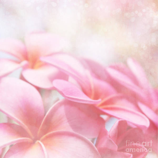 Pink Plumeria Blossoms Poster featuring the photograph Aloha by Sharon Mau