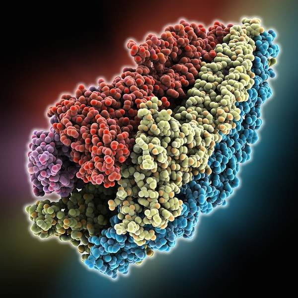 Molecule Poster featuring the photograph Acetylcholine Receptor Molecule by Science Photo Library