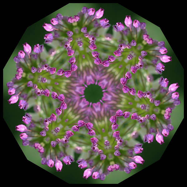 Giant Poster featuring the digital art Allium by Patsy Zedar