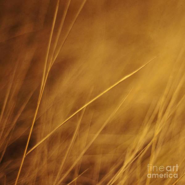 Grass Poster featuring the photograph Aurum by Priska Wettstein