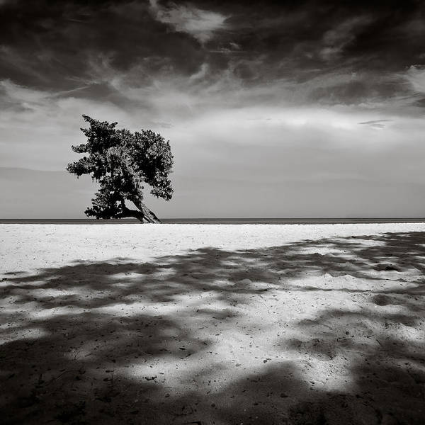 Tree Poster featuring the photograph Beach Tree by Dave Bowman
