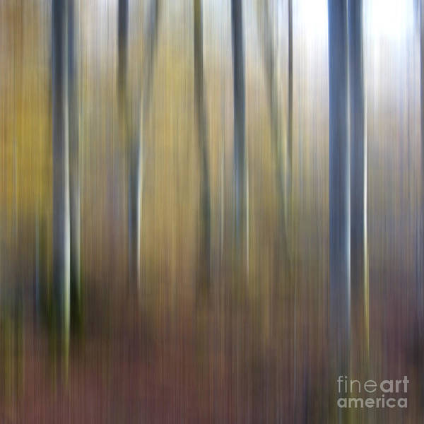 Abstract Artistic Beech Forests Beech Forest Betula Birches Birch Tree Birch Wood Birch Blur Effects Blur Effect Blurred Blurry Daylight Daytime Day Forest Landscapes Forest Landscape Forests Forest Landscapes Landscape Motion Blur Nature Nobody Outdoors Out Of Focus Outside Picture Details Picture Detail Surreal Trees Tree Trunks Tree Trunk Tree Wood Poster featuring the photograph Birch Trees. Abstract. Blurred by Bernard Jaubert