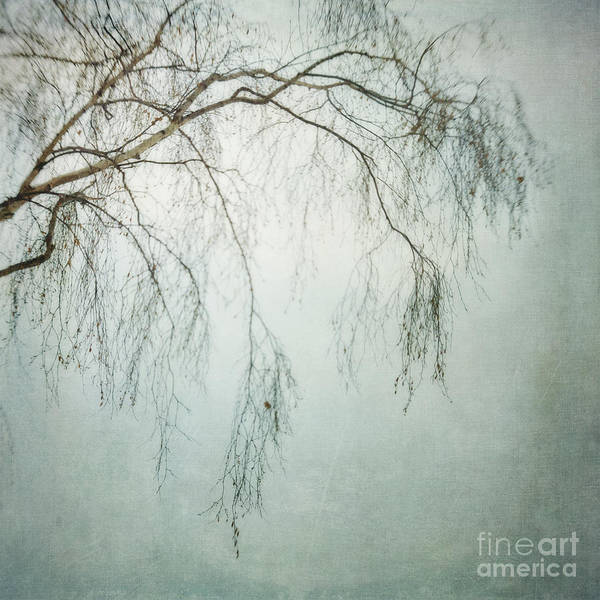 Twig Poster featuring the photograph bleakly III by Priska Wettstein